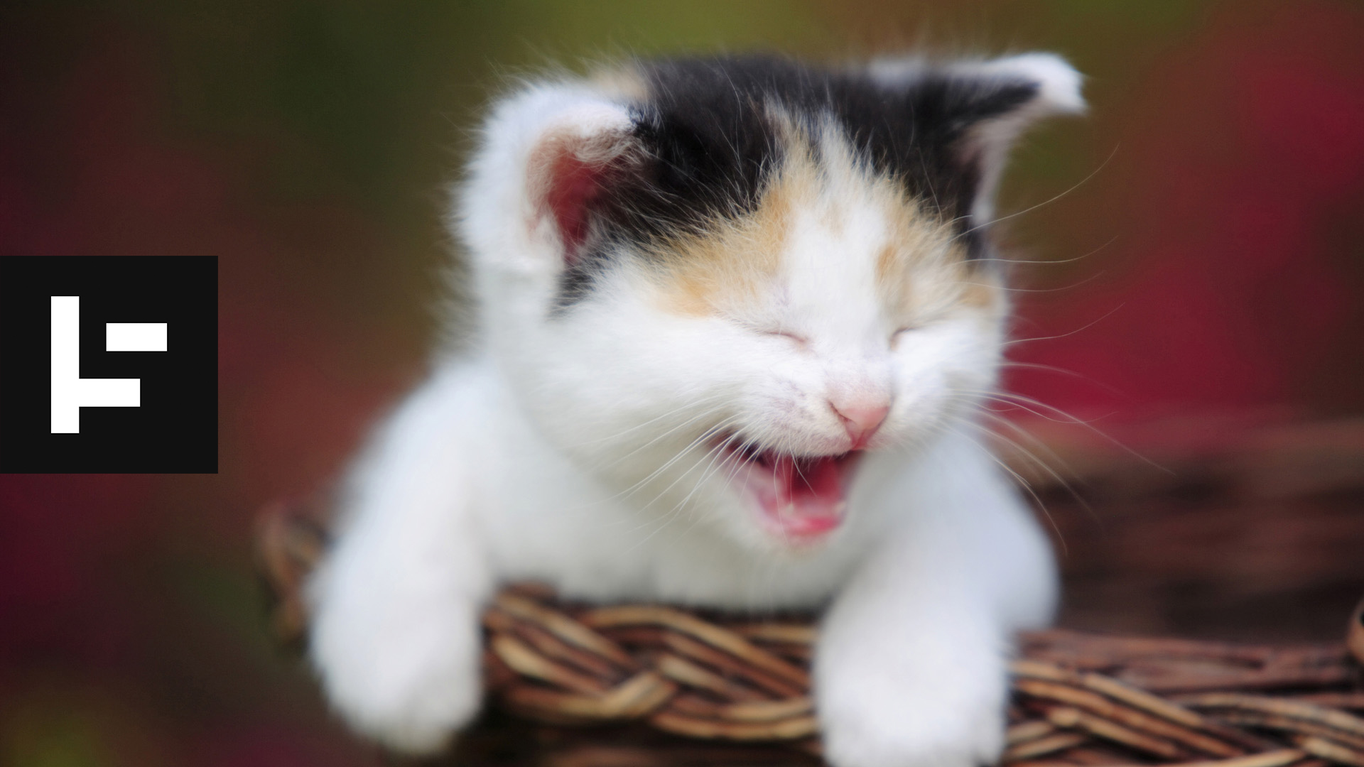 This Is Why Funny Cat Videos Are Good For You - INSH Funny Cat Videos Episodes